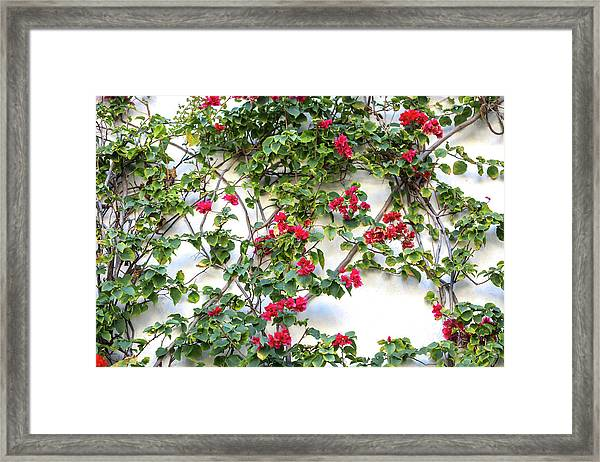 Blushing Blooms Framed Print