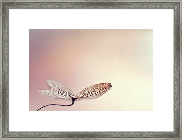 Blushing Framed Print