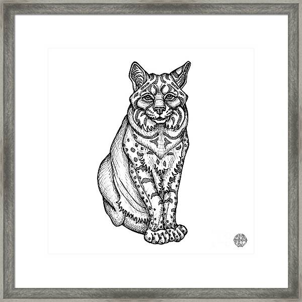 Framed Print featuring the drawing Bobcat by Amy E Fraser