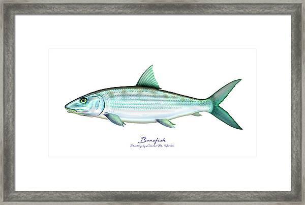 Bonefish Framed Print