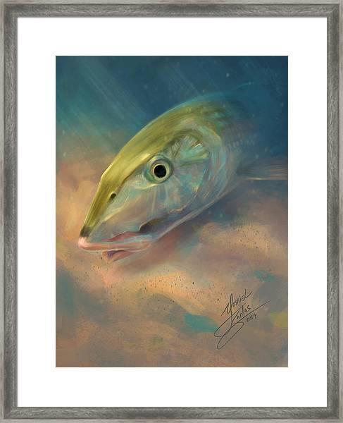 Bonefish Portrait Framed Print