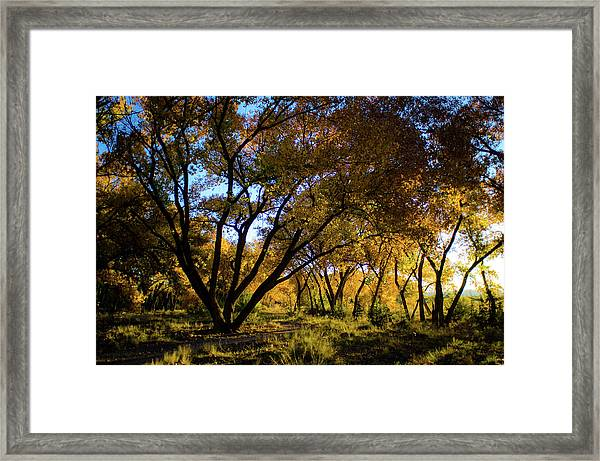 Bosque Color Framed Print