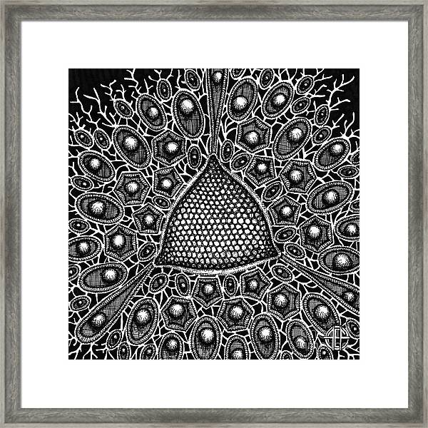 Framed Print featuring the drawing Botanical Bioform 10 by Amy E Fraser