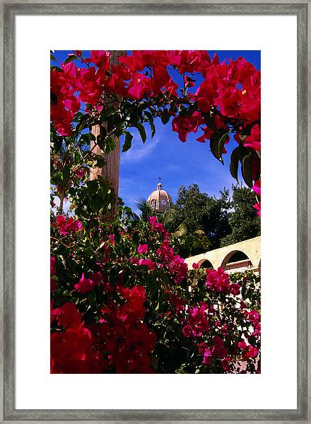 Bougainvillea Arch Framing Belltower Framed Print