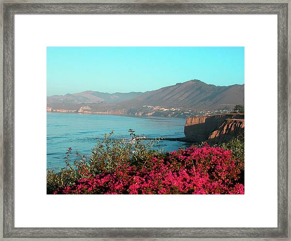 Bougainvilleas, Central California Coast Framed Print