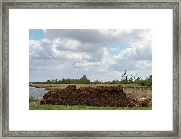 Framed Print featuring the photograph Bound Reeds by Anjo Ten Kate