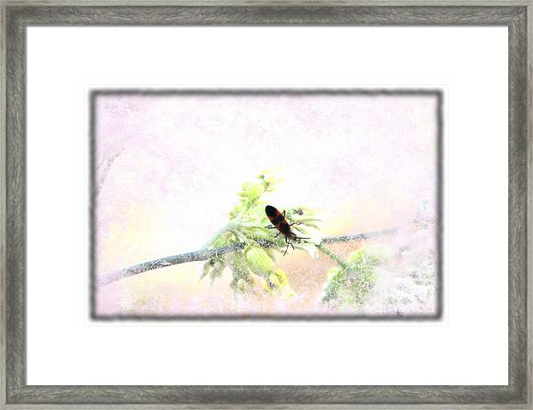 Boxelder Bug In Morning Haze Framed Print