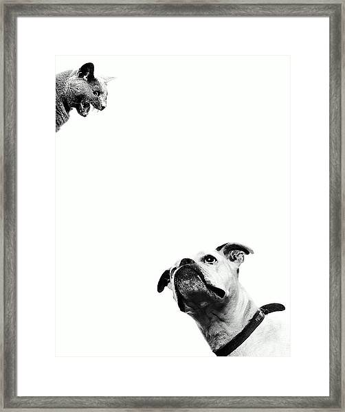 Boxer Dog Looking At Cat Above Head Framed Print by Robert Daly