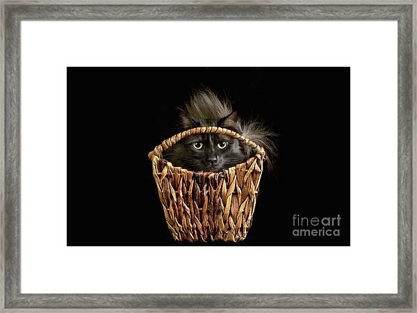 Boyfriend In A Basket Framed Print