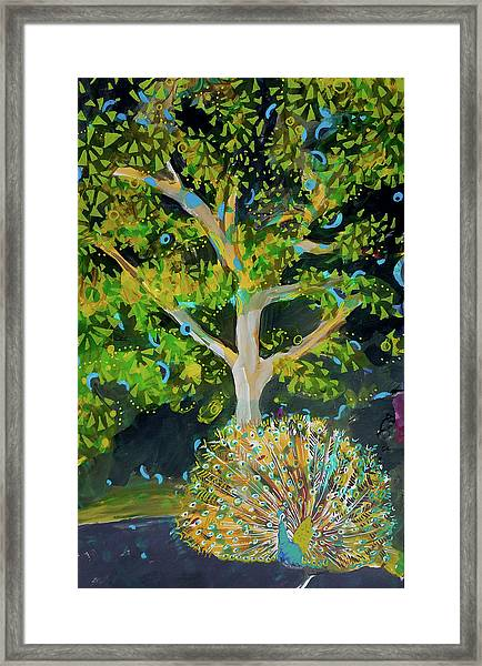 Branching Out Peacock Framed Print