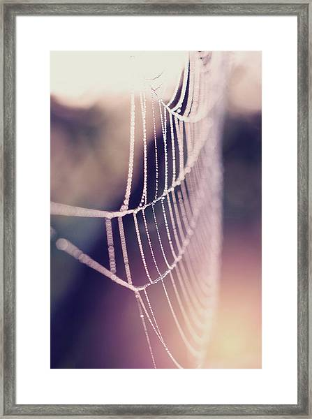 Bright And Shiney Framed Print