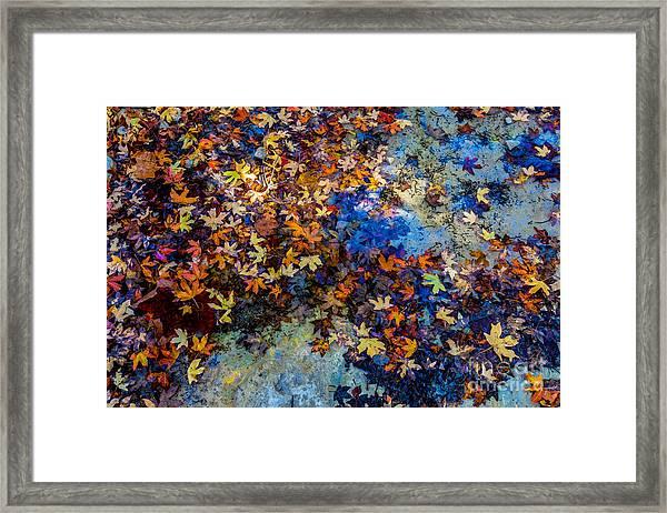 Bright Beautiful Fall Foliage Floating Framed Print
