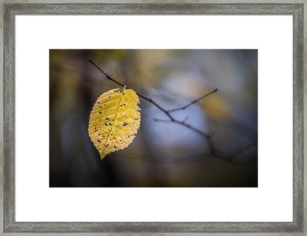 Bright Fall Leaf 1 Framed Print
