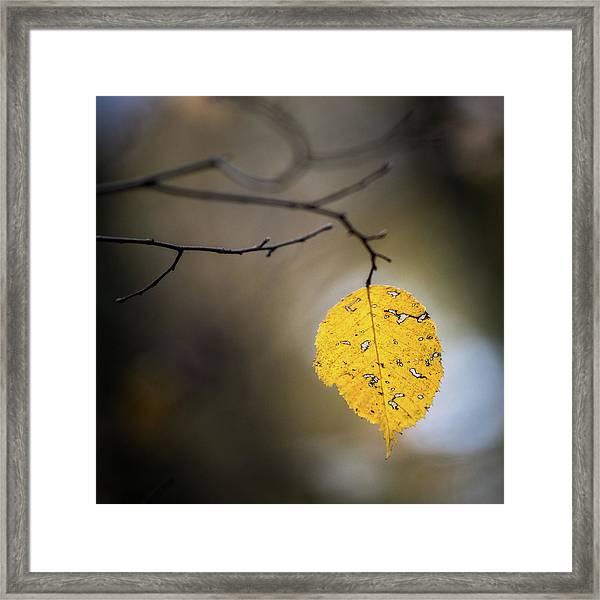Bright Fall Leaf 7 Framed Print