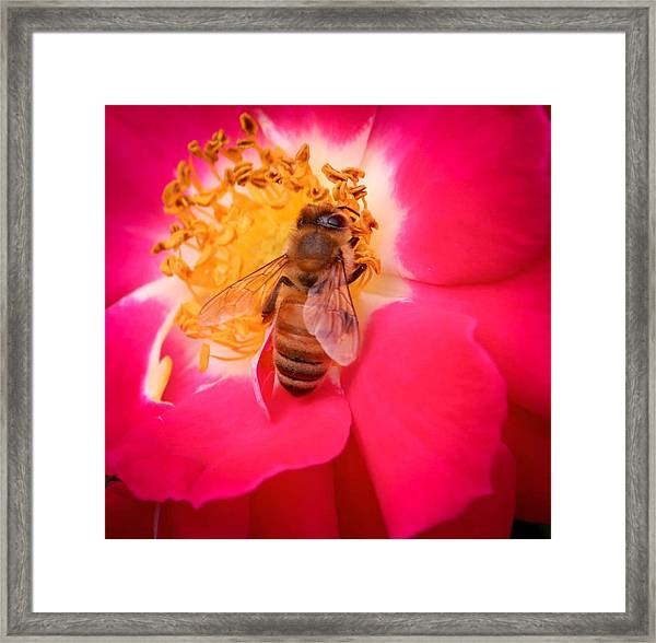 Brilliant Bee Framed Print