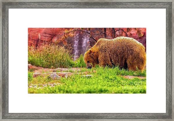Brisk Walk Framed Print