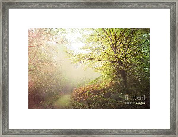 Broceliand Path Framed Print