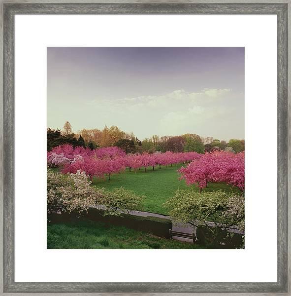 Brooklyn Botanical Gardens Spring Color Framed Print