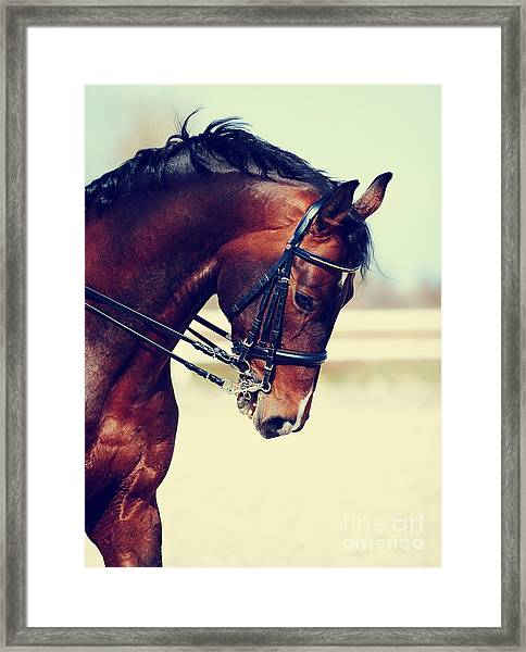 Brown Stallion. Portrait Of A Sports Framed Print