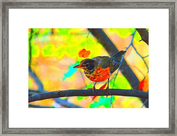 Brushed Robin Framed Print by Edward Swearingen