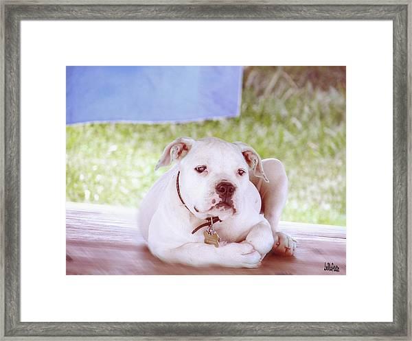 Bulldog Rana Art 80 Framed Print