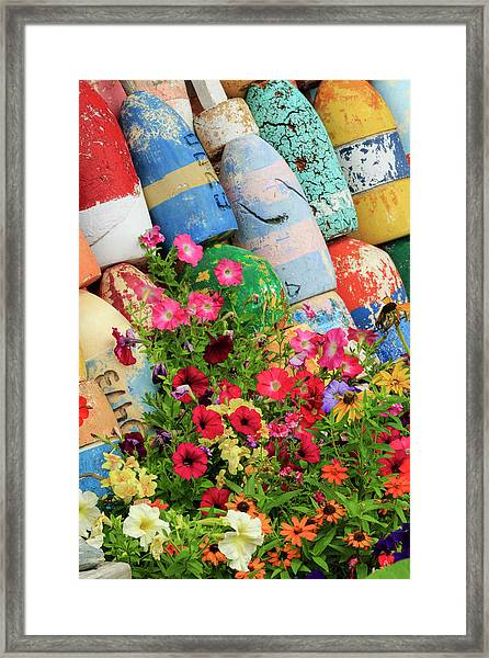 Buoys And Petunia Flowers, Rockport Framed Print by Adam Jones