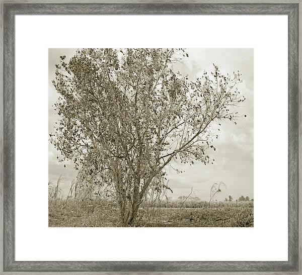 Burned Framed Print