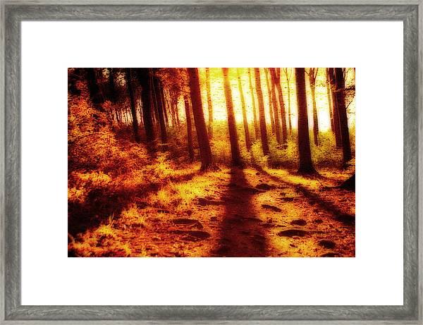 Burning Forest Framed Print