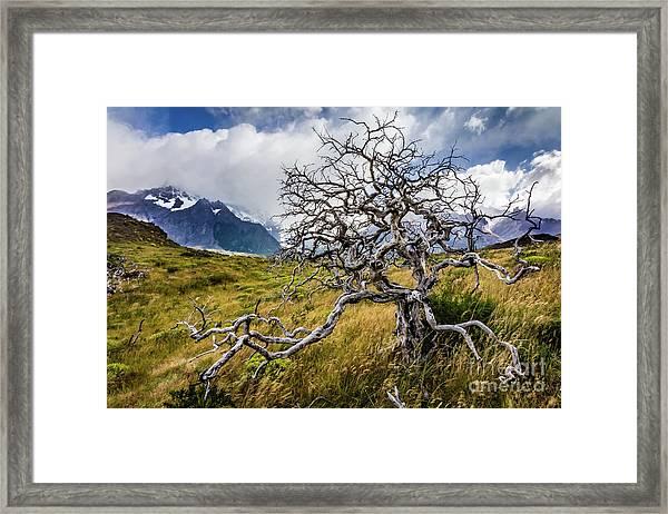 Burnt Tree, Torres Del Paine, Chile Framed Print