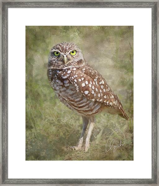Burrowing Owl Framed Print