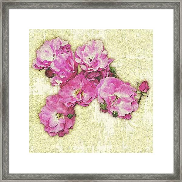 Bush Roses Painted On Sandstone Framed Print