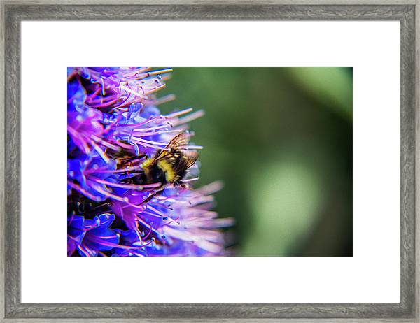 Busy Bee 2 Framed Print