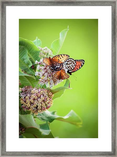 Butterfly Buffet II Framed Print