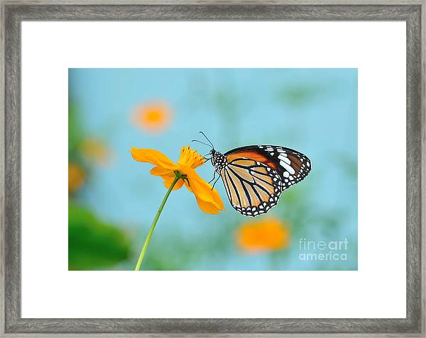 Butterfly Common Tiger And Flower In Framed Print