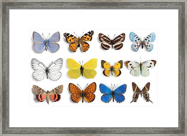 Butterfly, Insect, Wing Framed Print