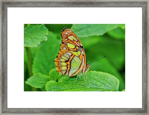 Butterfly Leaf Framed Print