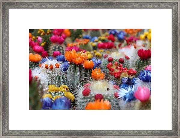 Cacti Flowers Framed Print
