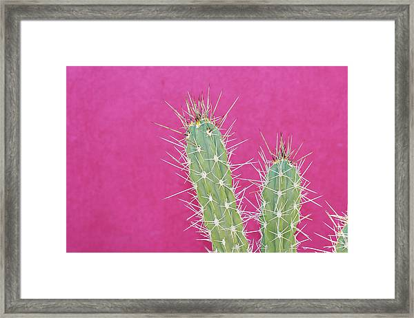 Cactus Against A Bright Pink Wall Framed Print