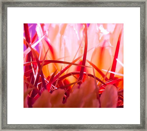 Cactus Cathedral Framed Print