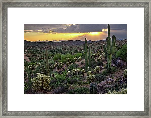 Cactus Sunset Framed Print