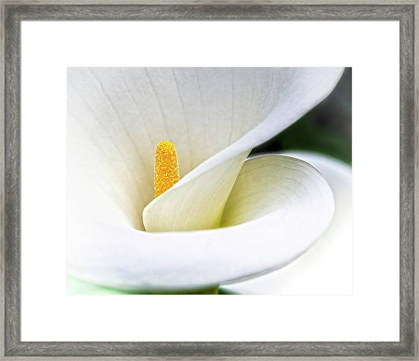 Cala Framed Print