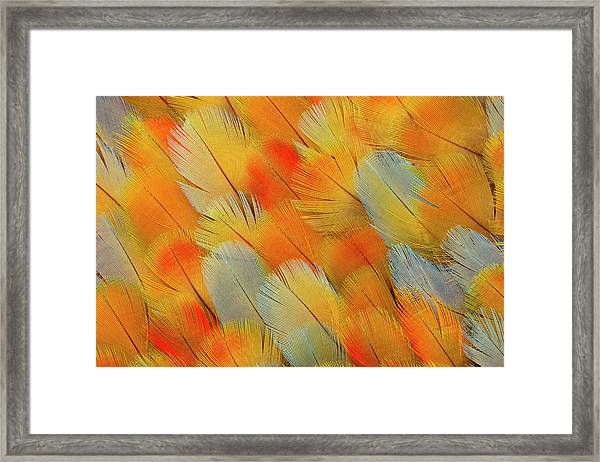 Camelot Mawaw Feather Design Framed Print