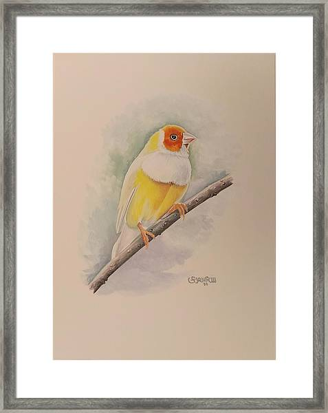 Framed Print featuring the painting  Canary Bird by Said Marie