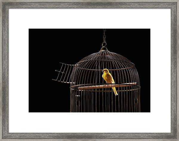 Canary In Cage With Open Door Framed Print