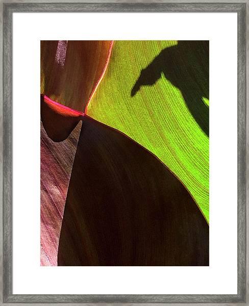 Canna_2022_17 Framed Print