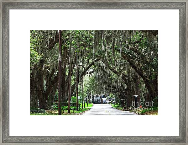 Canopy Road Framed Print