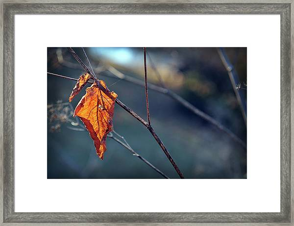 Captured In Light Framed Print
