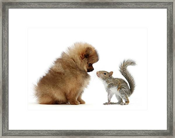 Careful I May Contain Nuts Framed Print