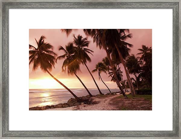 Caribbean, Barbados, Pristine Beach Framed Print