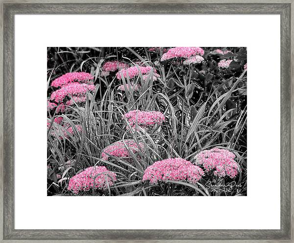 Carved Pink Butterfly Bush Framed Print